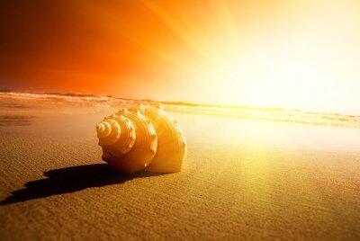 Фотообои Ракушка на закате