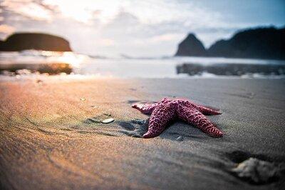 Фотообои Морская звезда