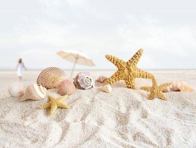 Фотообои Морские ракушки