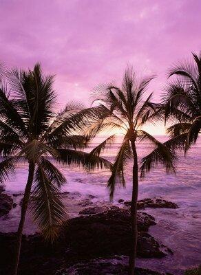 Фотообои Пальмы на закате