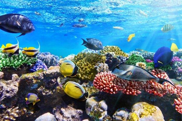 фотообои рыбки под водой