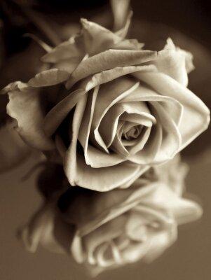 Винтажные фотообои Ретро роза