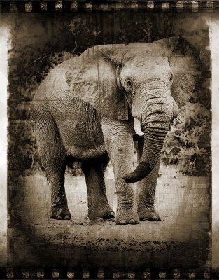 Винтажные фотообои Слон
