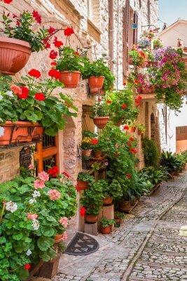 Фотообои Алея герани в старом городе