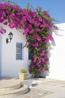 Фотообои красный цветы на домах Бугенвиля
