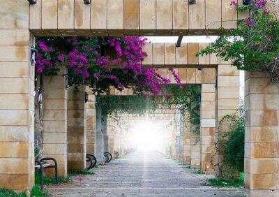 Фотообои Арки и цветы