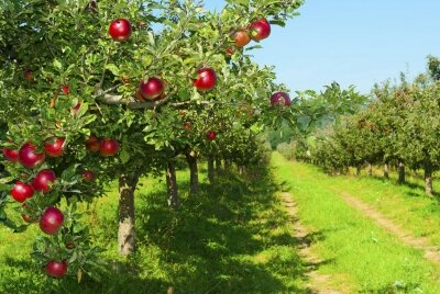Фотообои Яблоневый сад