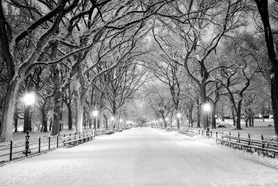Фотообои Зимний парк