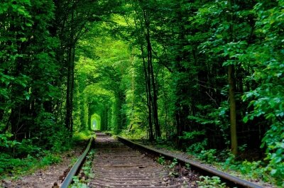 Фотообои Железнодорожные пути в лесу