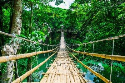 Фотообои Мост в тропическом лесу