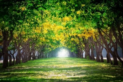 Фотообои Аллея в лесу