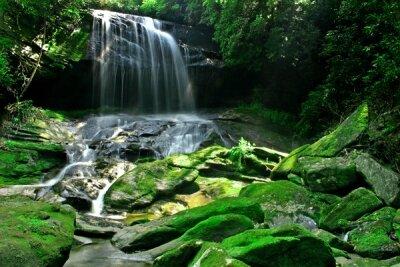 Фотообои Водопад в джунглях