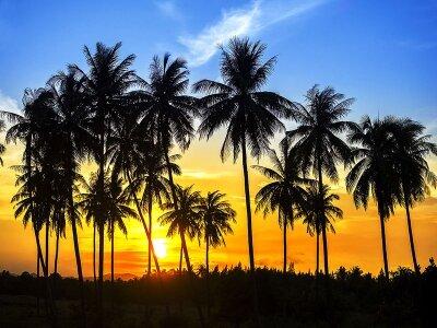 Пальмовая панорама
