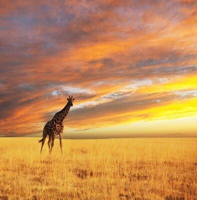 Фотообои для зала Жираф в саванне