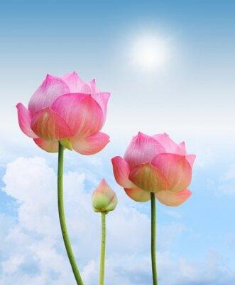Фотообои для зала Цветы лотоса