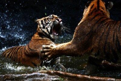 Фотообои для зала Два тигра