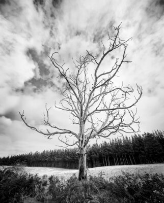 Фотообои для зала Осенне дерево