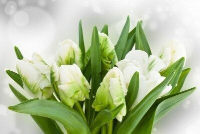Фотообои Экзотические тюльпаны