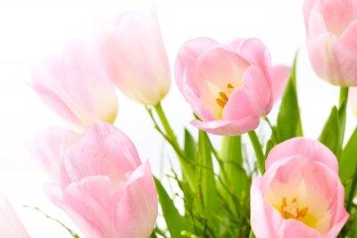 Фотообои Чувствительность тюльпанов