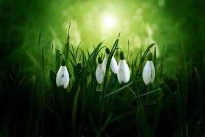 Фотообои Весна в подснежниках