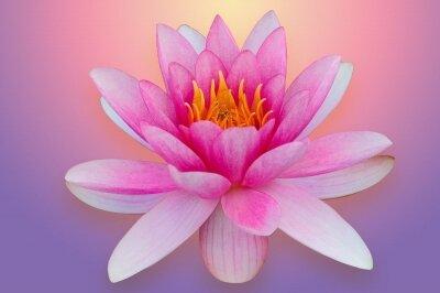 Фотообои Розовый лотос