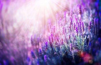 Фотообои Волшебство лаванды