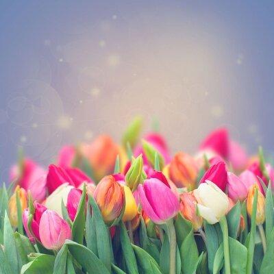 Фотообои Нежность тюльпанов