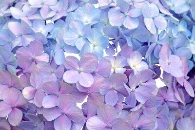 Фотообои Сиреневые цветочки