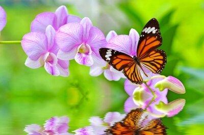 Фотообои бабочка на орхидеях