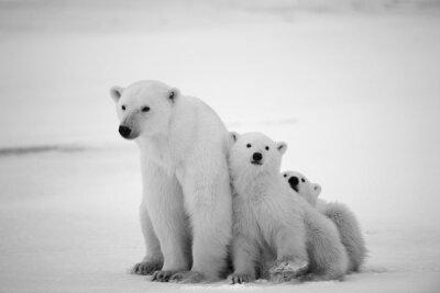 Фотообои для спальни Белые медведи