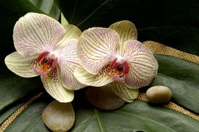 Фотообои для спальни Орхидеи