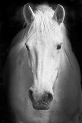 Фотообои для спальни Белый конь