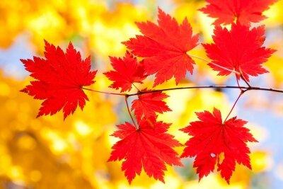 Фотообои Кленовые листья
