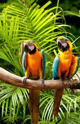 Фотообои для кухни Экзотические папугаи