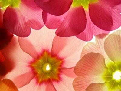 Фотообои Цветочный ансамбль
