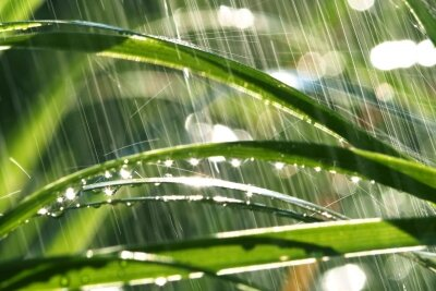 Фотообои Утренний дождь