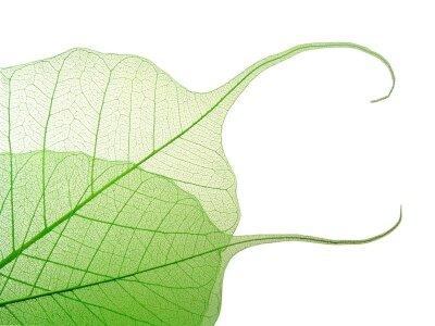 Фотообои Прозрачная таинственность листьев