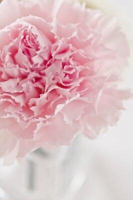 Фотообои Цветочный бархат