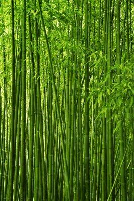 Фотообои в прихожую зеленые стволы бамбка
