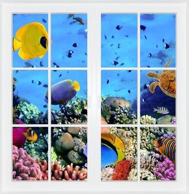 Фотообои с окном Подводный мир