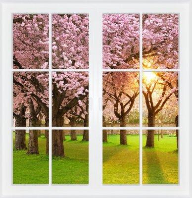 Фотообои с окном Цветение сакуры