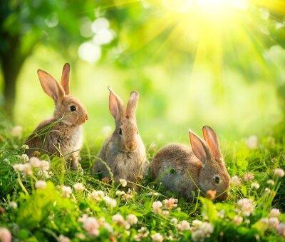 Зайцы на поляне