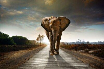 Фотообои Слон на дороге