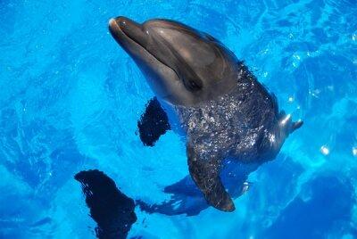 Дельфин в бассейне