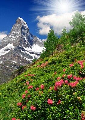 Цветы на склоне