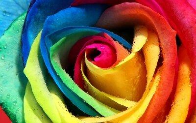 Фотообои на потолок Разноцетная роза