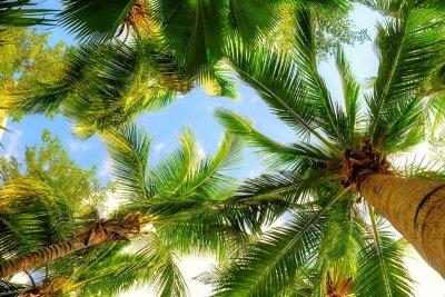 Фотообои на потолок Пальмы на острове