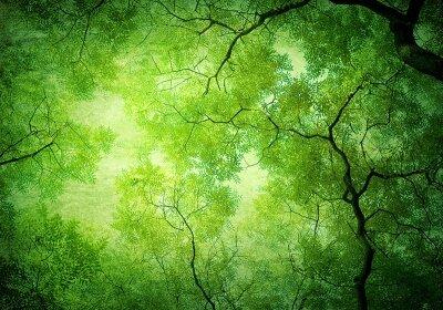 Фотообои на потолок Кроны деревьев