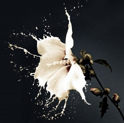 Креативные фотообои Белый цветок
