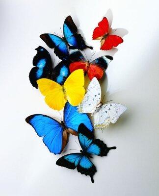 Креативные фотообои Бабочки
